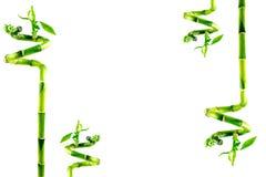 Bambushintergrund mit Exemplarplatz lizenzfreie stockfotos