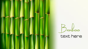 Bambushintergrund. Vektor Lizenzfreie Stockfotos