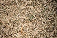 Bambusidanedgång på jordning som bakgrund Arkivbild