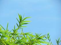 Bambusidor och blå himmel Fotografering för Bildbyråer