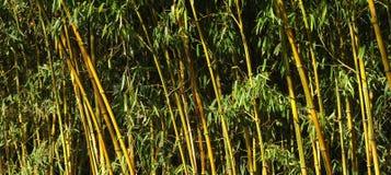 bambuskog Royaltyfria Foton