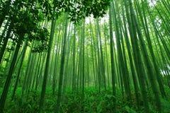 bambuskog Royaltyfri Bild