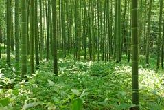 bambuskog Royaltyfri Fotografi