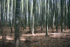 bambuskog Arkivfoto