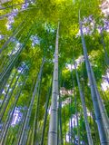 Bambuskog för låg vinkel på arashiyamaen, Kyoto royaltyfri bild