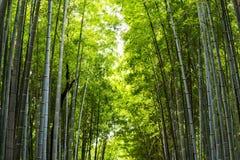 bambuskog för naturbakgrund arkivbilder