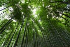 Bambuskog från låg vinkel royaltyfri fotografi