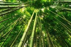 Bambuskog i Damyang royaltyfri fotografi