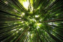 Bambuskog i Damyang Royaltyfri Foto