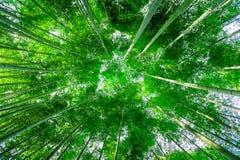 Bambuskog i Kyoto, Japan fotografering för bildbyråer