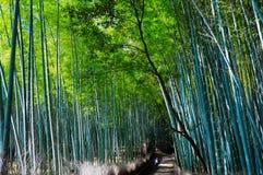 Bambuskog i Kyoto Japan Royaltyfri Foto