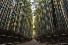 Bambuskog i Kyoto, Japan Arkivfoton