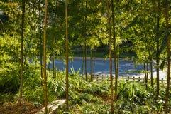 Bambuskog i solsken Arkivbilder
