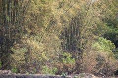 Bambuskog i staden av probolinggoen, indonesia arkivbilder