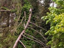Bambuskog i Tak Province i nordvästliga Thailand Fotografering för Bildbyråer