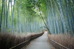 bambuskog kyoto Arkivbild