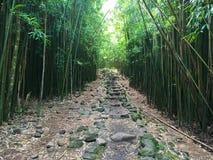 Bambuskog längs den Pipiwai slingan arkivbilder