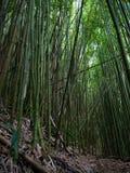 Bambuskog Maui Hawaii Arkivfoton