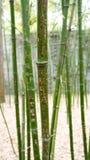 Bambuskog med hieroglyf Arkivbild
