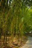 Bambuskog och bana royaltyfri bild