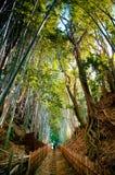Bambuskog och liten smutsgränd, Sakura stad, Chiba, Japan Royaltyfria Foton