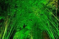 Bambuskog på natten Royaltyfri Bild