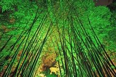 Bambuskog på natten Arkivbild