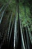 Bambuskog på natten Arkivbilder