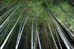 Bambuskog på natten Arkivfoto