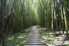 Bambuskog, Pipiwai slinga, Kipahulu delstatspark, Maui, Hawaii Arkivbild