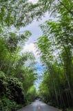 Bambuskog som döljer vägen Arkivbilder