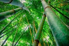 Bambuskog som ser till himlen royaltyfri foto