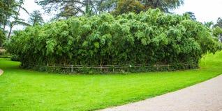 Bambuskogen i den Margam slotten arbeta i trädgården, val arkivbilder