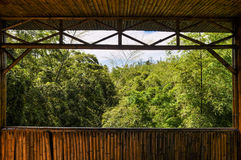 Bambuskogplats Royaltyfria Foton