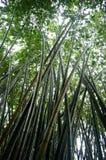 bambuskogregn Royaltyfri Fotografi