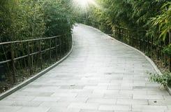bambuskogtrail Arkivfoto