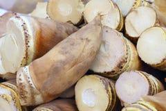 bambuskott Royaltyfri Bild