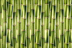 bambuskott royaltyfri foto