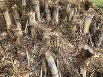 Bambuskottet torkar arkivfoto
