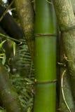 Bambusnahaufnahme Stockfotografie