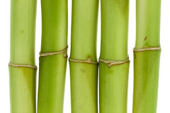 Bambusnahaufnahme Stockfoto