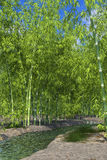 Bambusoase Lizenzfreie Stockfotografie