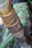 bambusowa dłoni zdjęcie royalty free