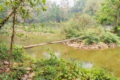 Bambusowa i gumowa tubka przez jezioro Zdjęcie Royalty Free