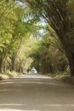 Bambusowa jama Zdjęcie Royalty Free