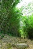 bambusowa lasowa ścieżka obrazy stock