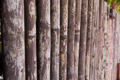 Bambusowa tekstura Zdjęcie Stock
