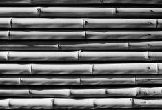 Bambusowa tekstura w czarny i biały Obrazy Stock