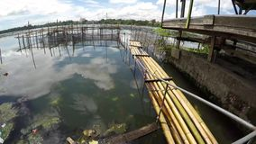 Bambusowa tratwa unosi się na zanieczyszczającym jeziorze zdjęcie wideo