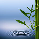 Bambus. Obrazy Royalty Free